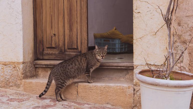 De ce pisica / cainele urineaza colorat / rosu.